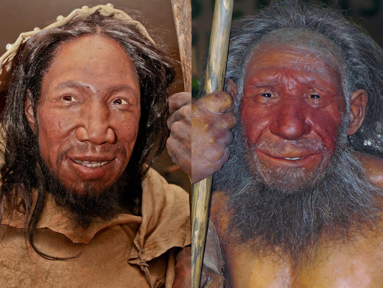 약 4만년 전 유럽의 호모 사피엔스(왼쪽)와 시대 미상의 유럽 네안데르탈인의 골격을 감안해 재구성한 모형 비교 사진. 아시아의 호모 사피엔스도 서쪽에서 동쪽으로 이동하면서 네안데르탈인 등과 조우했을 것으로 짐작된다.