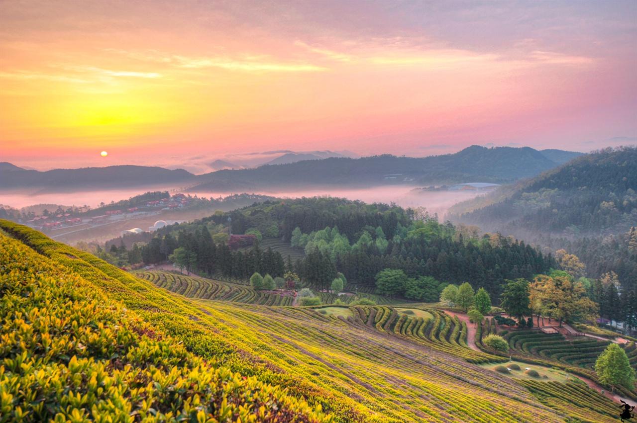 보성 대한다원의 아침  유달리 자욱하게 깔린 안개가 멋졌던 날이 기억에 남는다. 그때 담은 보성의 녹차 밭이 내 마음 속 깊은 곳에 있다.
