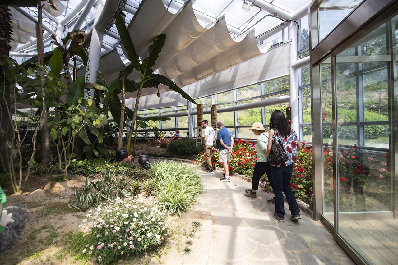 한국차박물관 뒤편, 실내정원 난대성 식물로 꾸려진 작은 식물으로, 한바퀴 도는 것으로 충분하지만 녹차 속의 색다른 구경거리다.