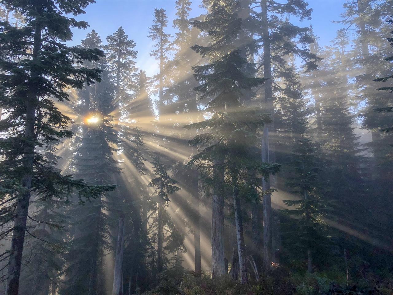 햇빛의 줄기 수많은 가닥의 햇살이 나무를 가르며 나의 길에 빛을 비췄다.