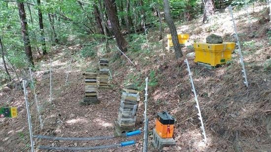 양봉업자의 벌통에 반달가슴곰이 접근하지 않도록 학습시키려고 설치해놓은 전기 울타리.
