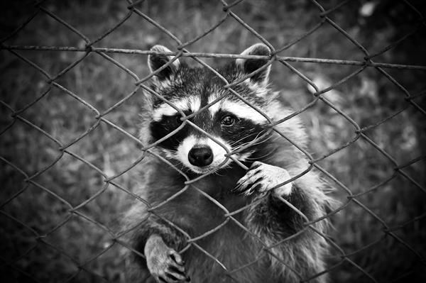 모든 동물은 각자 자기가 있어야 할 자리와 살아갈 목적이 있다