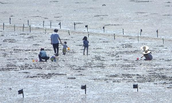 썰물 때 즐기는 오이도 갯벌체험