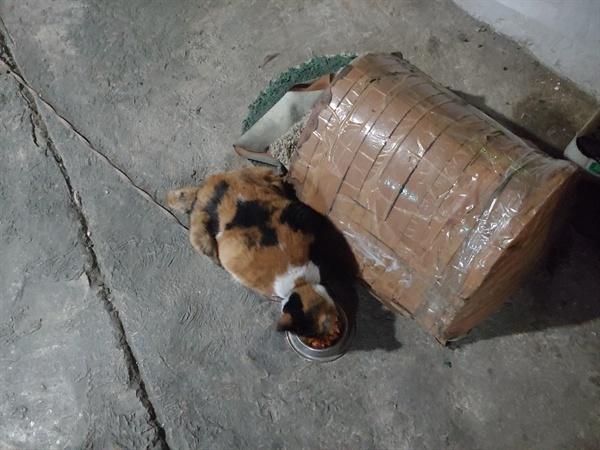 화장실과 밥그릇만 구비된 채 묶여 있는 고양이
