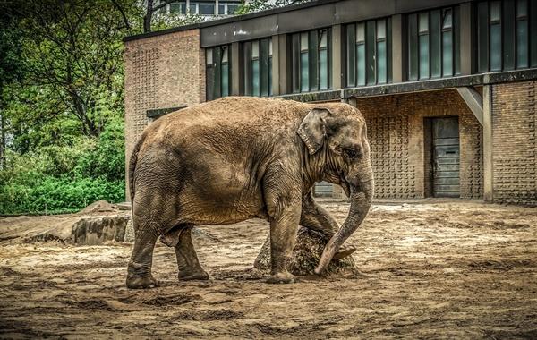 동물원 이야기를 꺼내는 이유는, 동물을 넘어 오늘날 '생명'이 처한 현주소를 생생하게 알려주는 생활 속 현장이 동물원이기 때문이다.