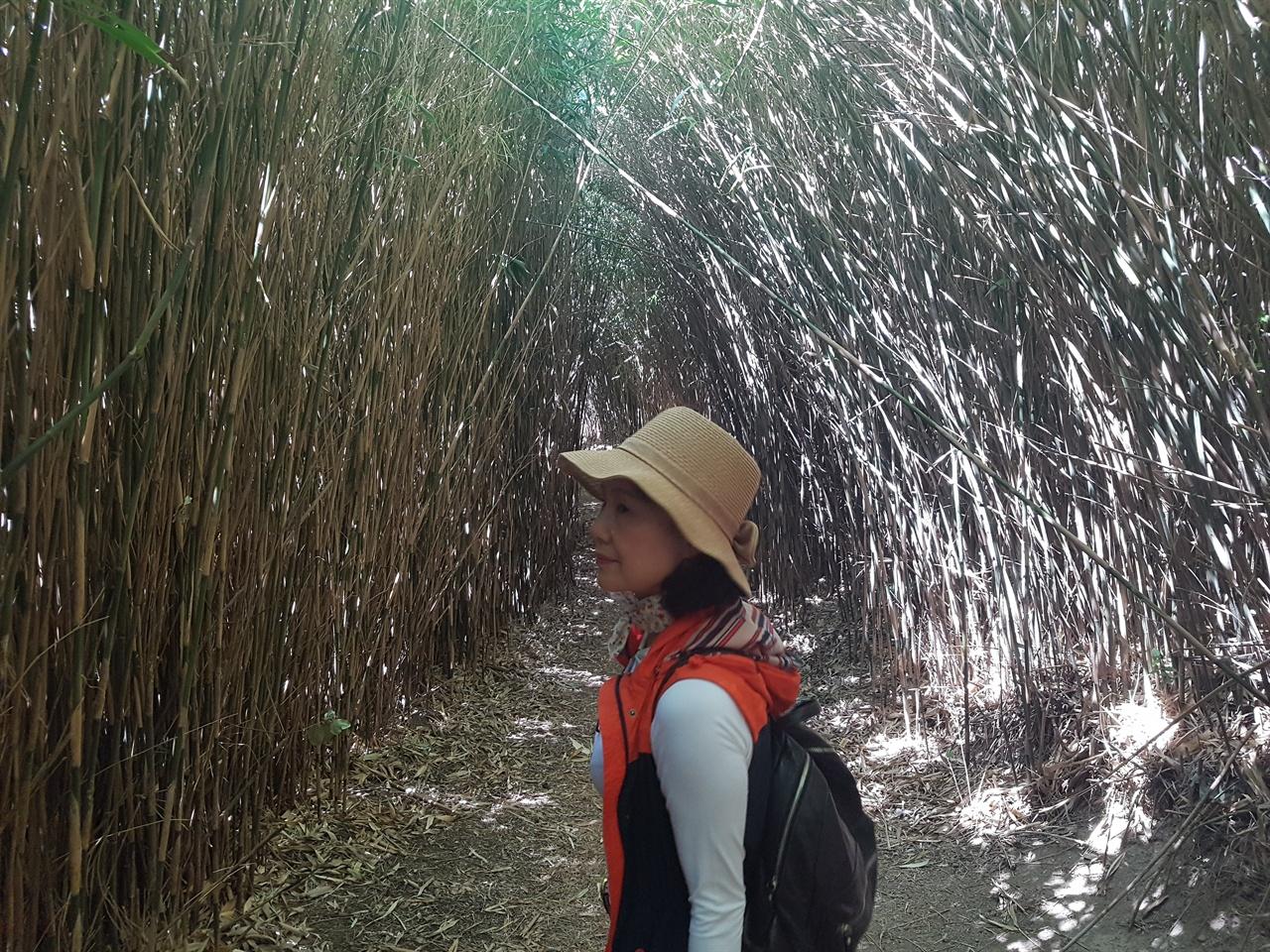 수많은 대나무가 터널을 이루고 자라있다. 죽도라는 이름이 붙여진 이유이다.