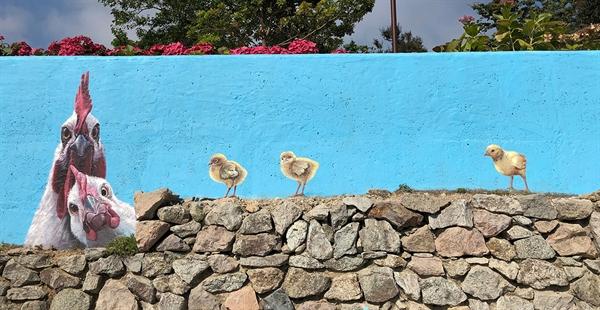 담 안에는 수국꽃, 담벼락엔 마을벽화가 도초도에서 열리는 제1회 섬 수국 축제를 더욱 빛나게 하고 있다.