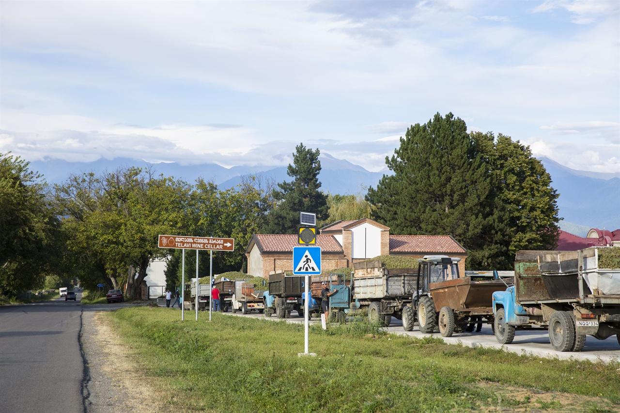 카헤티 하베스트 풍경   텔라비 와이너리 앞에서 수확한 포도를 한 가득 싣고  차례를 기다리는 트럭 행렬.