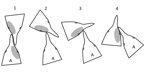 펭귄의 싸움 때 머리 부분 움직임 모식도. 공격하는 펭귄(A)이 상대 펭귄의 오른쪽 안면을 주로 공격하는 걸 알 수 있다. 이 결과 공격 당한 쪽에서는 오른쪽 안면에 상처를 많이 입게 된다.