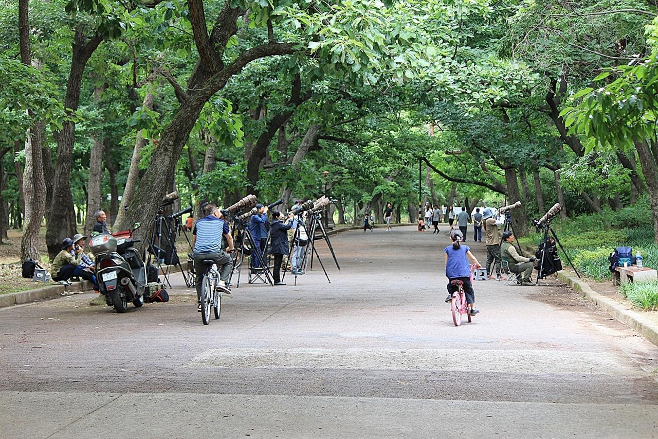 경주 황성공원 동문 부근에서 후투티 촬영에 여념이 없는 사진작가들 모습