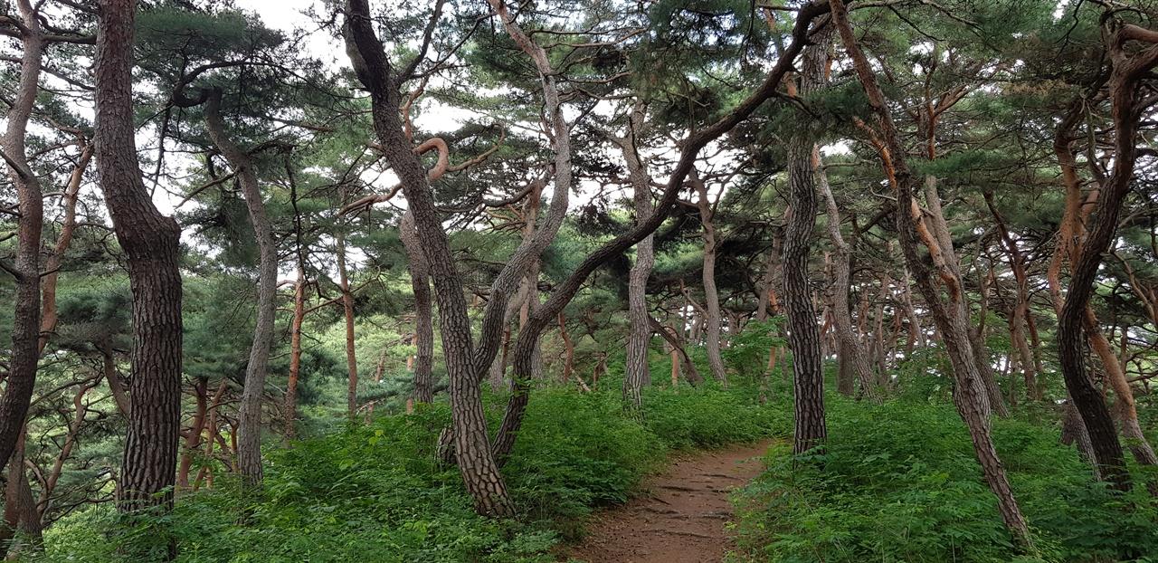 최고의 숲길   군왕대에서 나발봉 방면 1.2km가 마곡 최고의 숲길이다. 한여름에도 그늘이 지고, 평균 경사도가 1%로 산책하기 좋다.