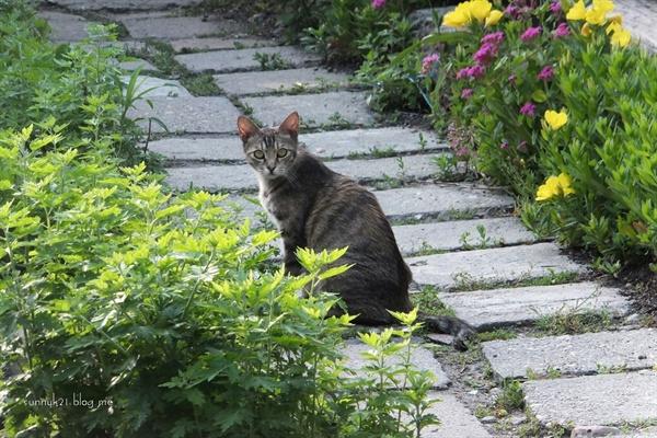 건널목 고양이