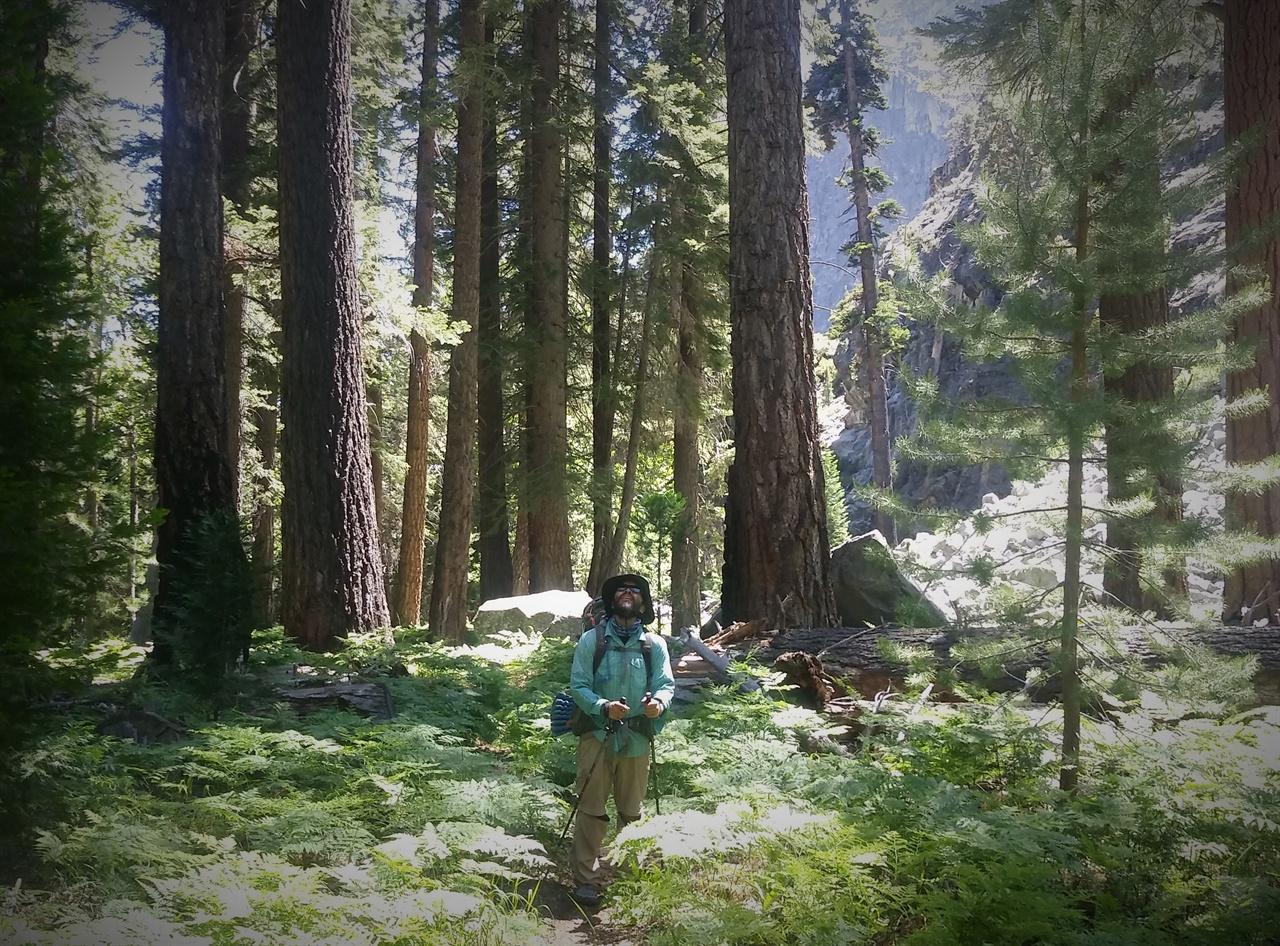 쥬라기 공원 워싱턴쪽 숲은 고사리과 식물이 많아 더욱 신비함을 자아낸다.