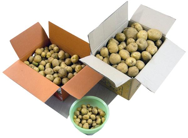 수확한 감자는 크고 작은 종이상자 하나씩과 씨알 작은 놈 한 바가지였다.