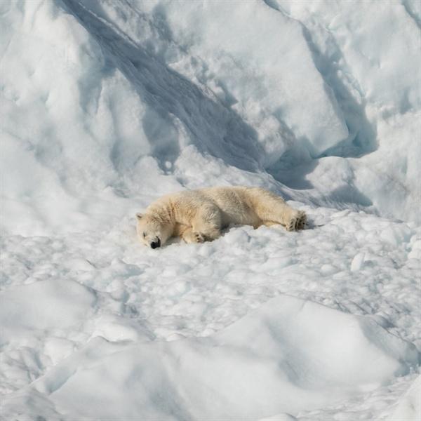 기후변화 하면 떠오르는 이미지는 북극곰. 하지만 사실 이 자리에 인간이 있는 게 더 현실적이다.