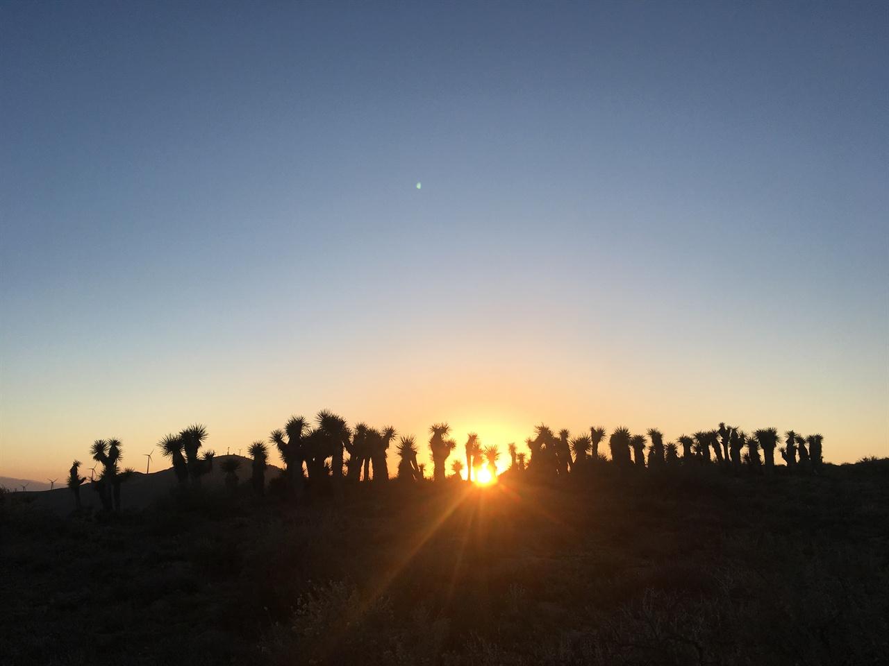 푹푹 찌는 무더위 속 사막의 저녁은 너무나도 아름답다.