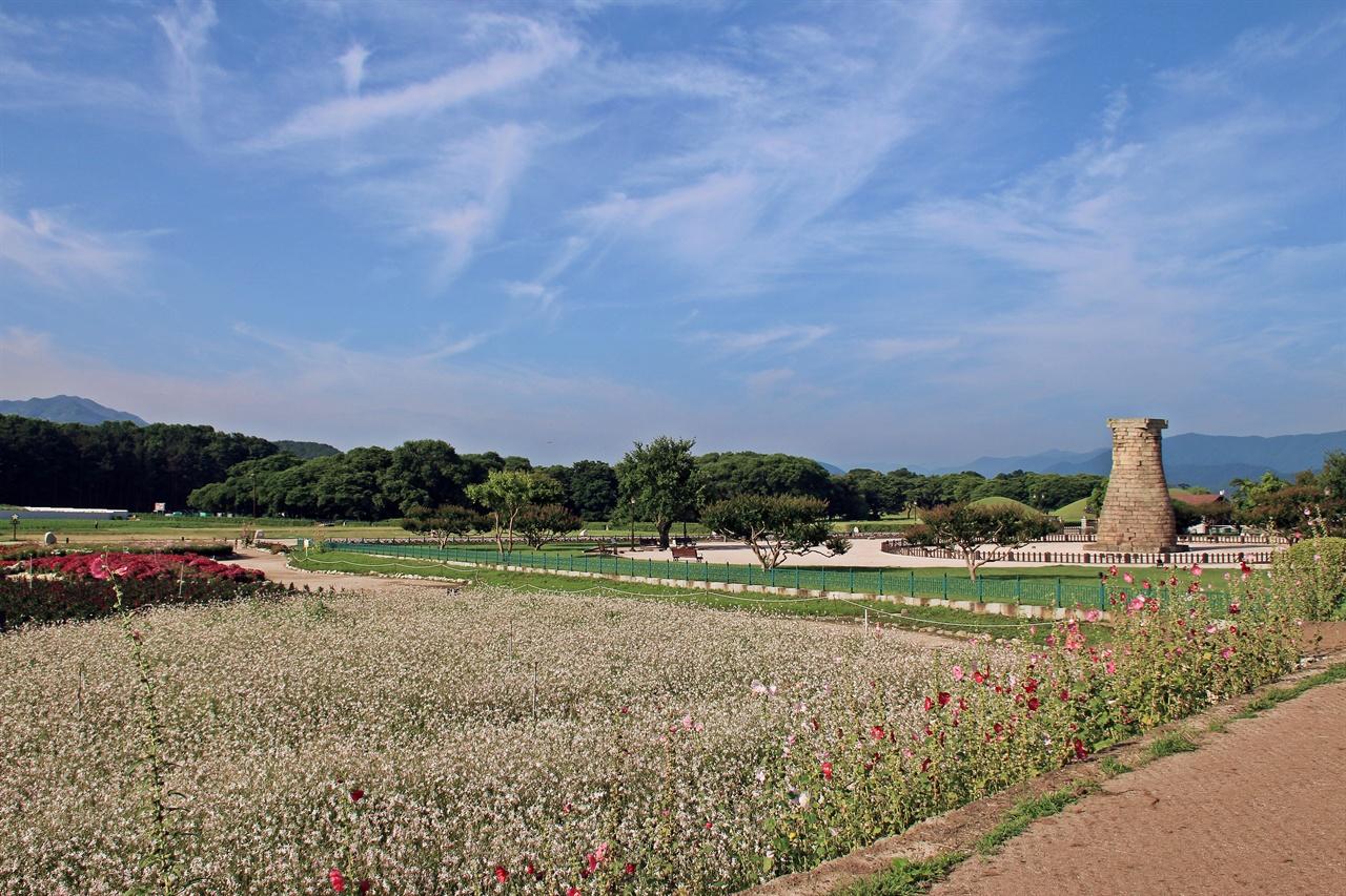 국보 제31호인 첨성대를 배경으로 하얀 바늘꽃과 베고니아가 화려한 자태를 뽐내고 있는 모습