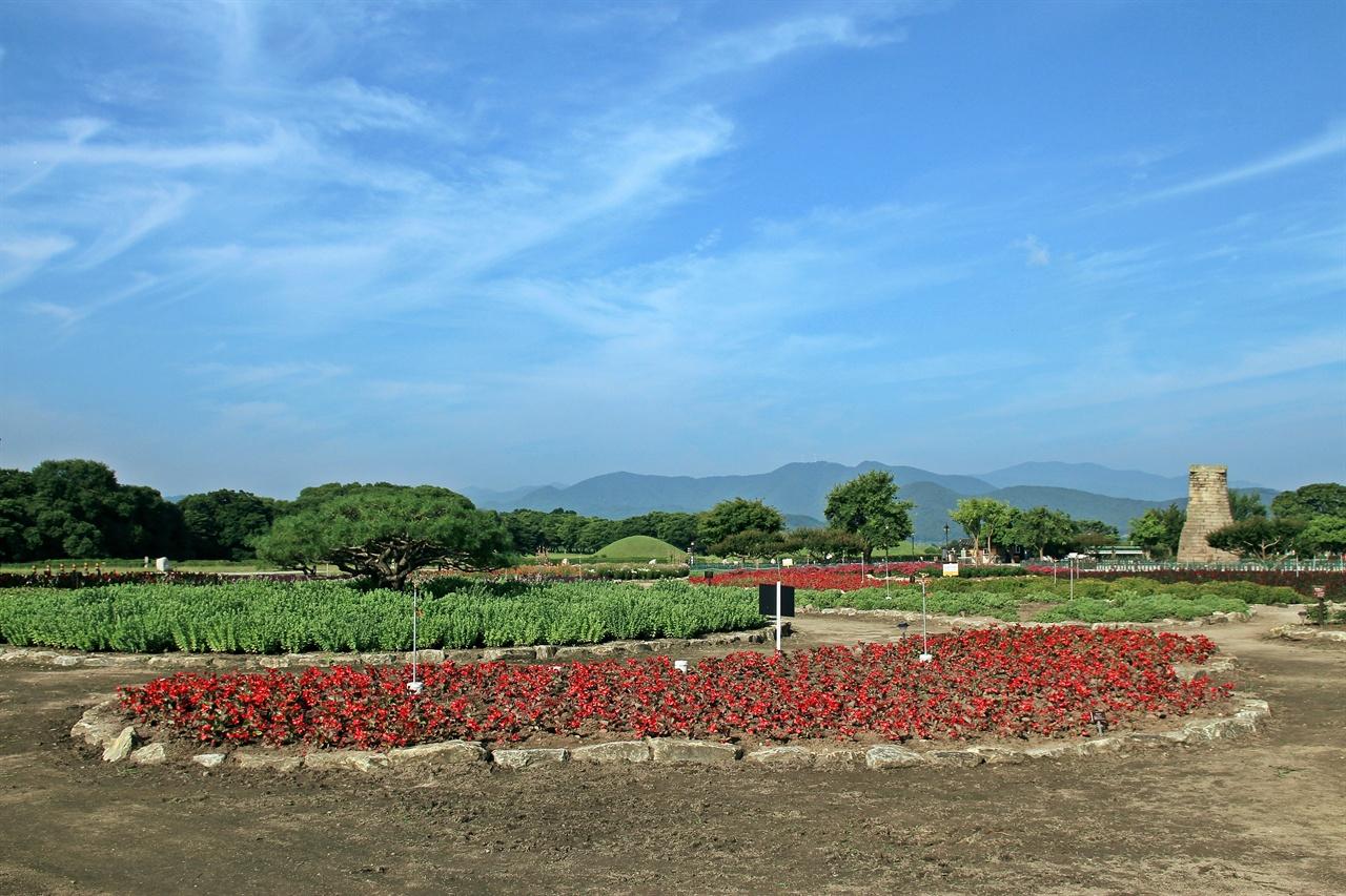 경주 동부사적지대 꽃밭단지에 식재된 울긋불긋한 색상의 베고니아 모습