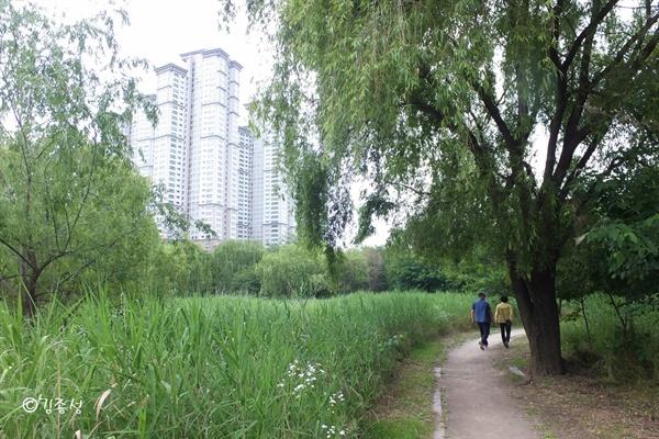 여의도 빌딩숲이 바라보이는 숲속 흙길.