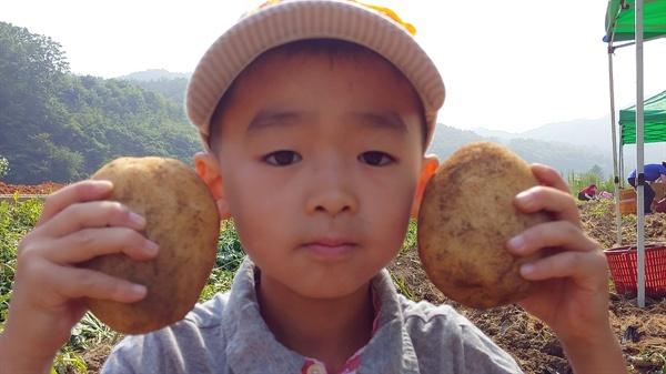 감자가 더 커요? 제 얼굴이 더 커요? 대가초등학교 1학년 이성덕 어린이가 직접 캔 왕감자를 자랑하고 있다.