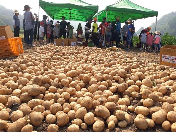 매포읍에 감자 팔러 가자 대가초등학교 어린이들이 학부모 농민교사들과 심고 거둔 감자를 매포읍 장날에 팔러 나간다. 판매 수입은 마을 경로당을 비롯한 지역에 기부금으로 사용한다.