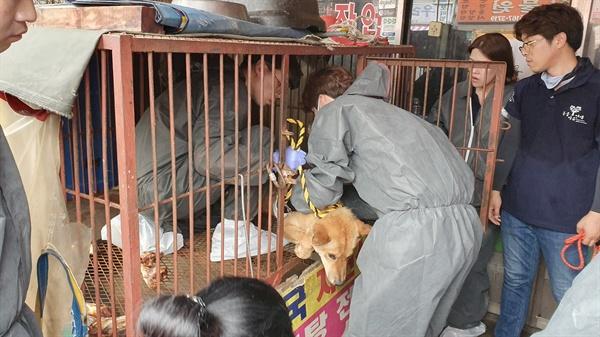 지난 7월 1일, 60년 된 부산 구포 개시장이 폐쇄되는 현장 모습이다. 이날 현장에서 86마리의 개들이 구조됐다.