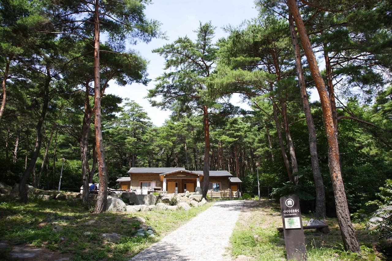 소나무 그늘 아래서 휴식을 즐길 수 있는 영덕군 칠보산 자연휴양림.
