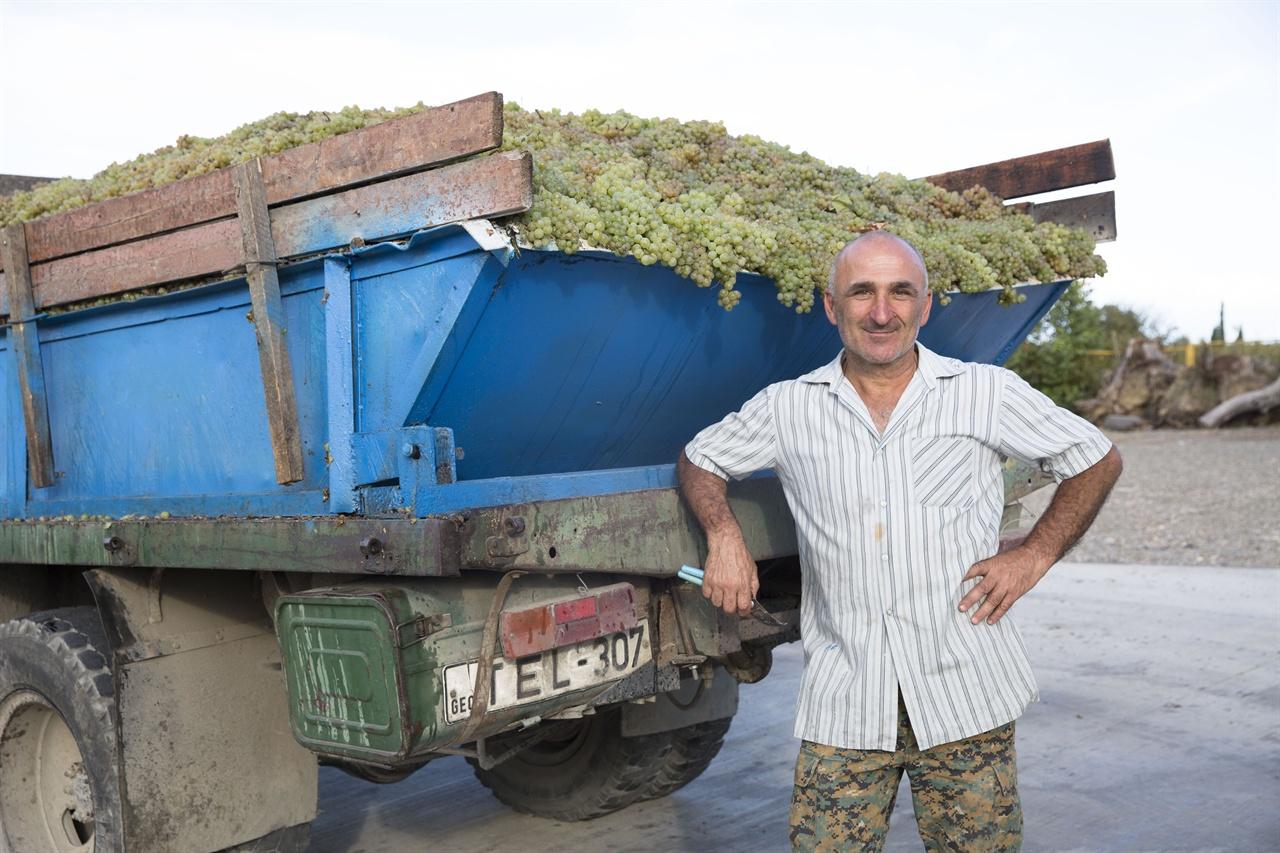 카헤티 들판에서 만난 농부     텔라니 와인셀러로 포도를 실어나르는 농부가 덥석 포도송이를 덥석 안겨 주었다. 그 농부의 인정이 뭉클해졌다.