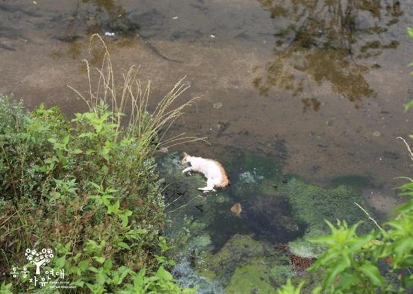 인근 하천에서 발견된 추가 고양이 사체