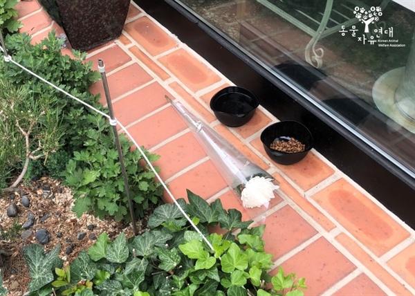 길고양이 시껌스가 매일같이 상주하던 미용실 앞에 놓인 국화꽃