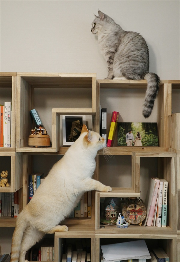 고양이와 같이 쓰는 책장