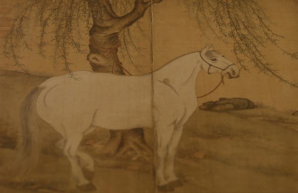 고산 윤선도 유물전시관에서 만난 공재 윤두서의 '유하백마도'. 버드나무 아래에서 흰 말이 노닐고 있다.