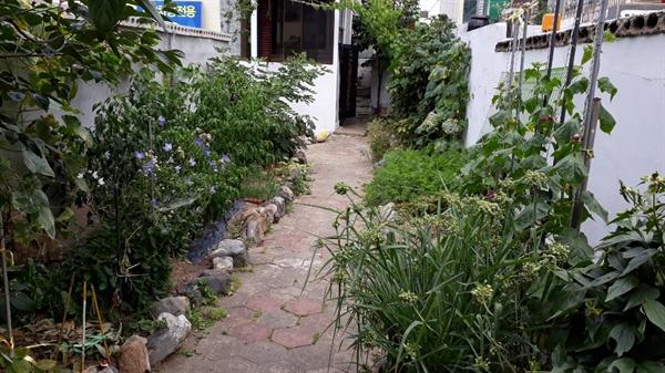 대문에서 바라본 녹색마당