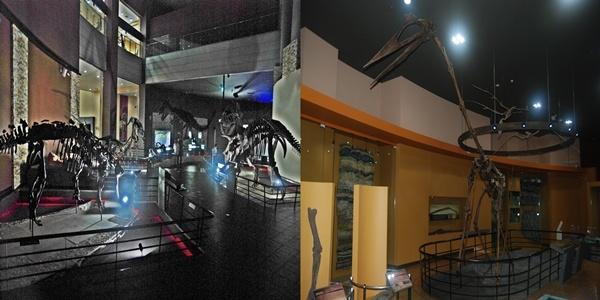 해남 공룡 박물관 좌(티라노사우르스, 트리케라톱스 등 다양한 공룡화석), 우(익룡은 크기가 최대 12m에 이른다)