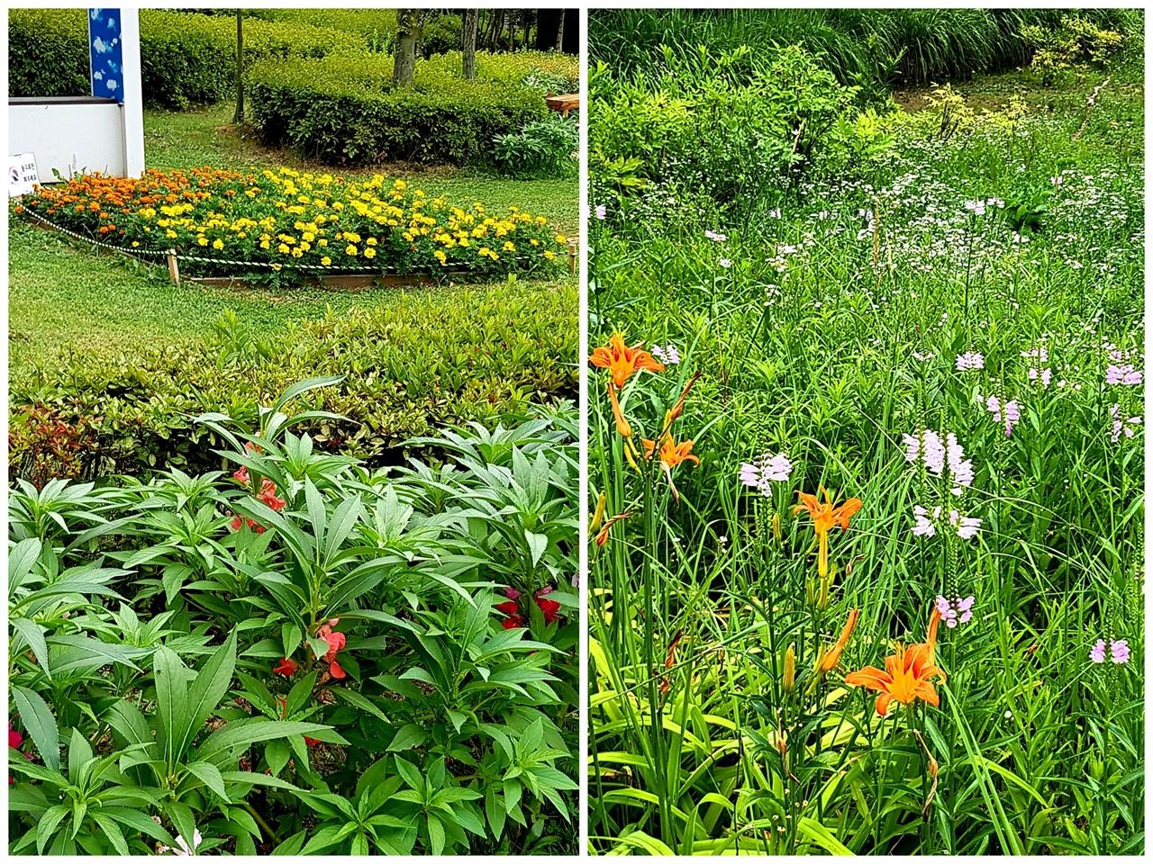 인간의 의도대로 꾸며야만 아름다운 조경일까? 자유롭게 어우러진 꽃밭이 더 아름다울 수도 있지 않을까?