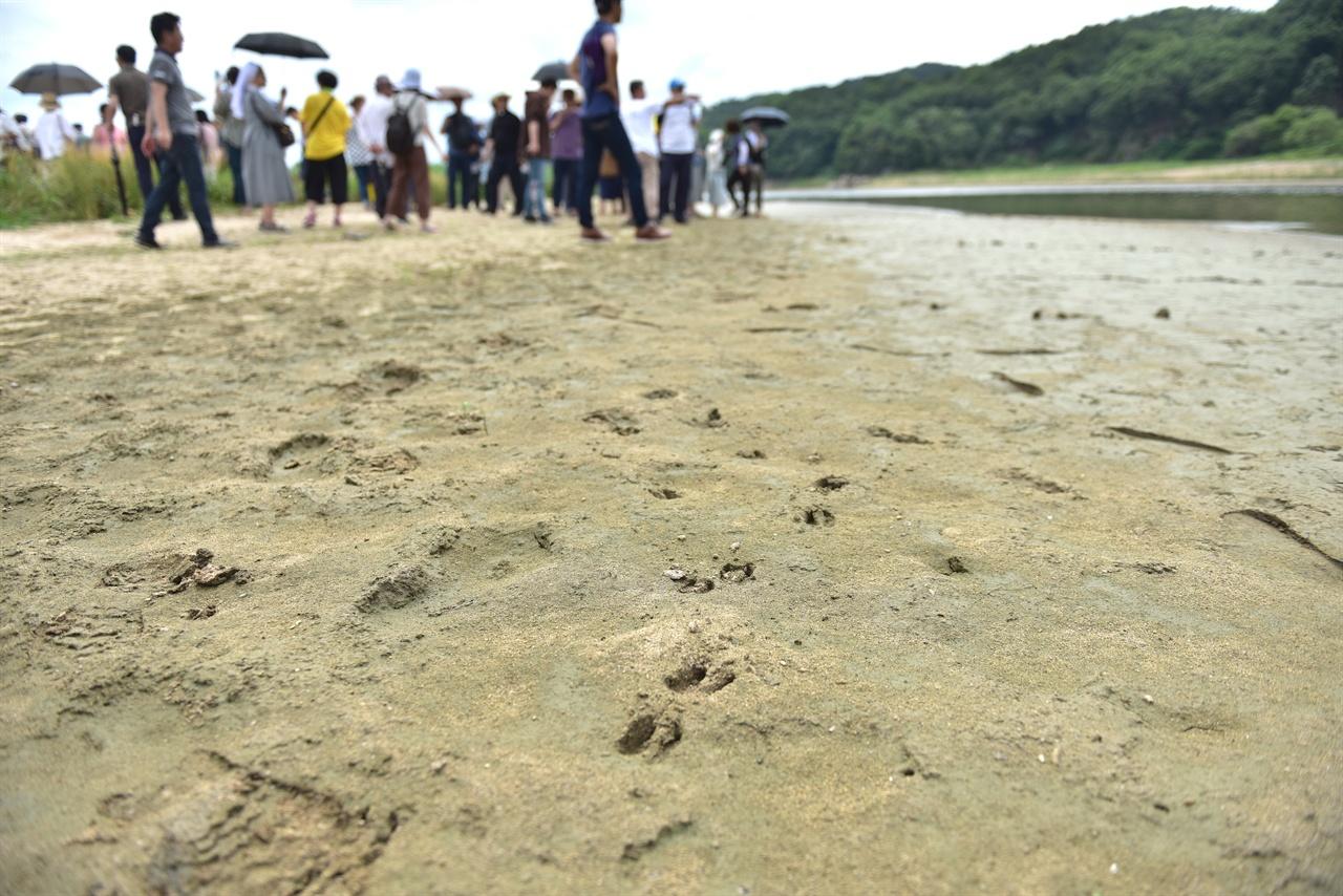 고라니 발자국 사이로 탐방중인 참가자들