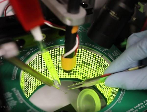 한마리의 모기가 실험장치 안에 들어가 있다. 미국 워싱턴 대학 연구팀은 최근 250여 마리의 모기를 대상으로 후각과 시각의 작동 방식을 밝혀냈다.