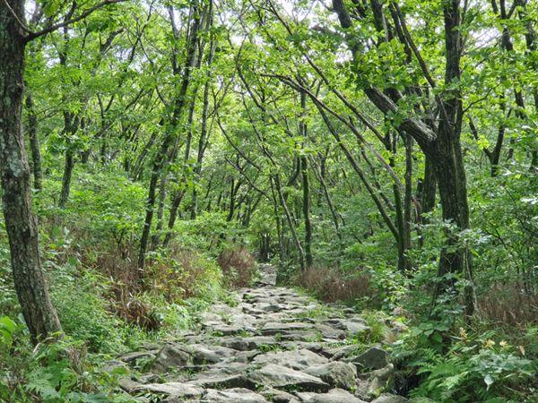 지리산 노고단 초록 숲이 시원한 노고단 탐방로