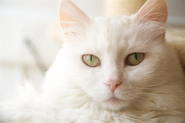 고양이를 키울 것인지, 버릴 것인지의 문제는 우리의 가치관이 부딪쳤을 때 어떻게 해결해 나갈 것인지를 암시하는 첫 번째 관문이나 마찬가지다.