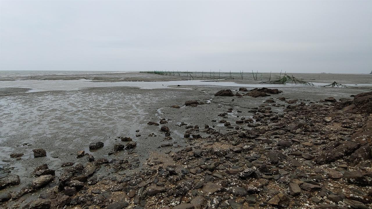 조개골해수욕장에서 바라본 갯벌.  아득히 펼쳐진 갯벌 위로 물고기를 잡기 위해 쳐놓은 그물들이 보인다.
