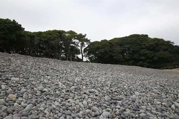 몽돌과 어우러진 소안도 미라리 상록수림. 천연기념물로 지정돼 있는 귀한 숲과 해변이다.