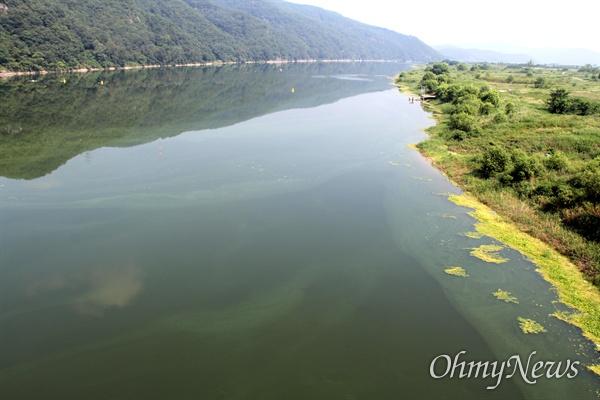 8월 4일 낙동강 합천창녕보 상류의 녹조.