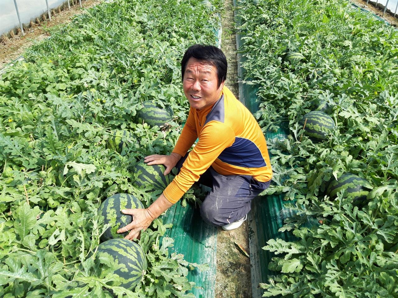 30년간 고령에서 수박을 키워온 농민 박해동 씨.