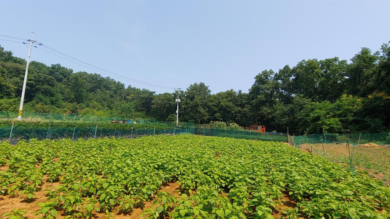 마을 입구의 밭. 정성스럽게 가꾼 농작물에서 주민들의 부지런함이 느껴진다.