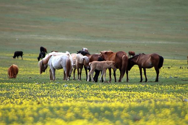 일행이 달리는 도로변 꽃밭에는 말들이 한가로이 풀을 뜯기도 했다