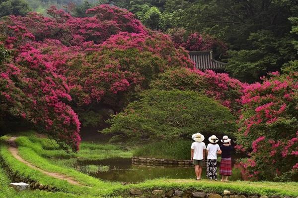 배롱꽃과 연못이 아름다운 옛 정원, 전라남도 담양의 명옥헌. 대한민국 명승 제58호입니다
