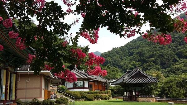 사찰이나 향교 서원에 배롱나무를 심어놓은 뜻은 백일홍처럼 꾸준히 학문과 수양에 힘쓰라는 의미일 것입니다