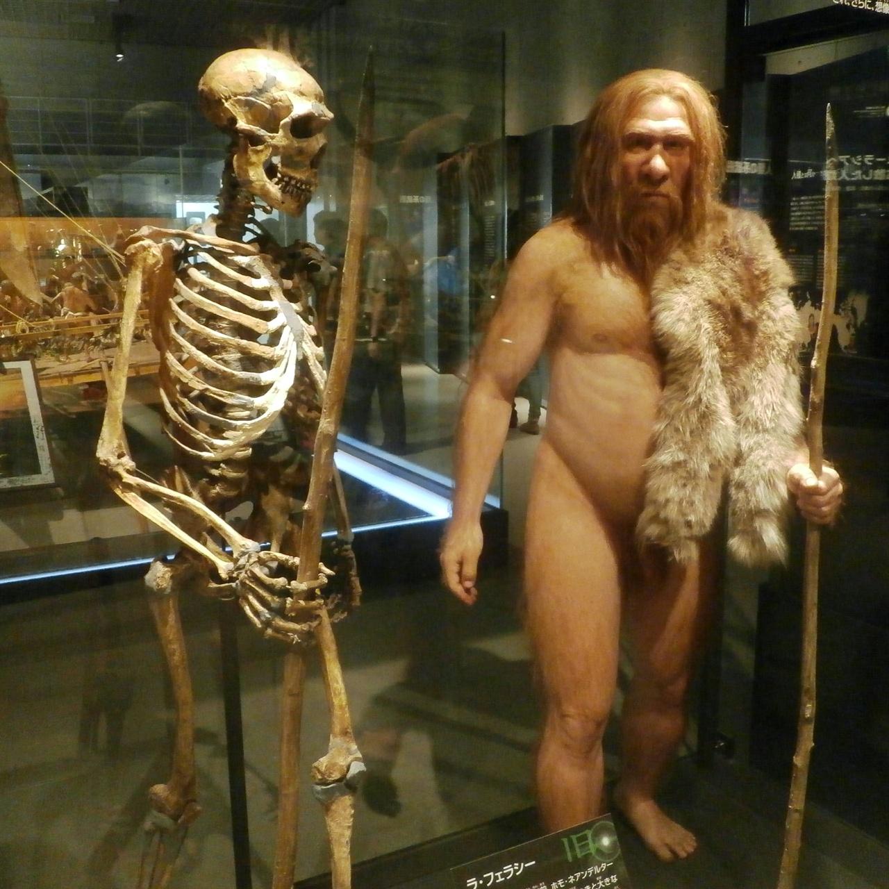 현생인류와 수만 년 동안 공존했던 네안데르탈인의 골격과 복원 모형. 이들은 현생 인류와 달리 대뇌 전두엽 부분의 돌연변이 등을 거치지 않아, 언어 구사의 고도화를 이루지 못했던 것으로 추정된다.