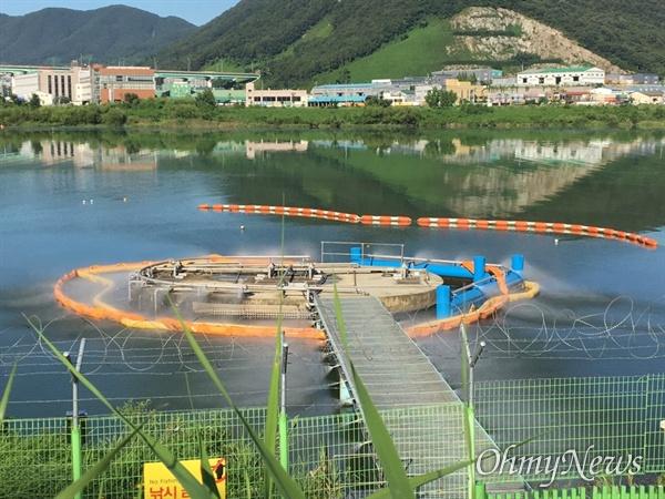 8월 13일 낙동강 물금취수장의 녹조.