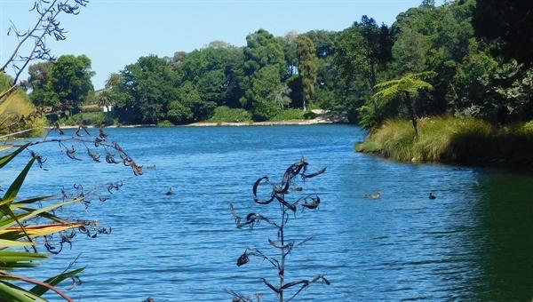 관광객이 많이 찾는 버지니아 호수(Virginia Lake) 공원